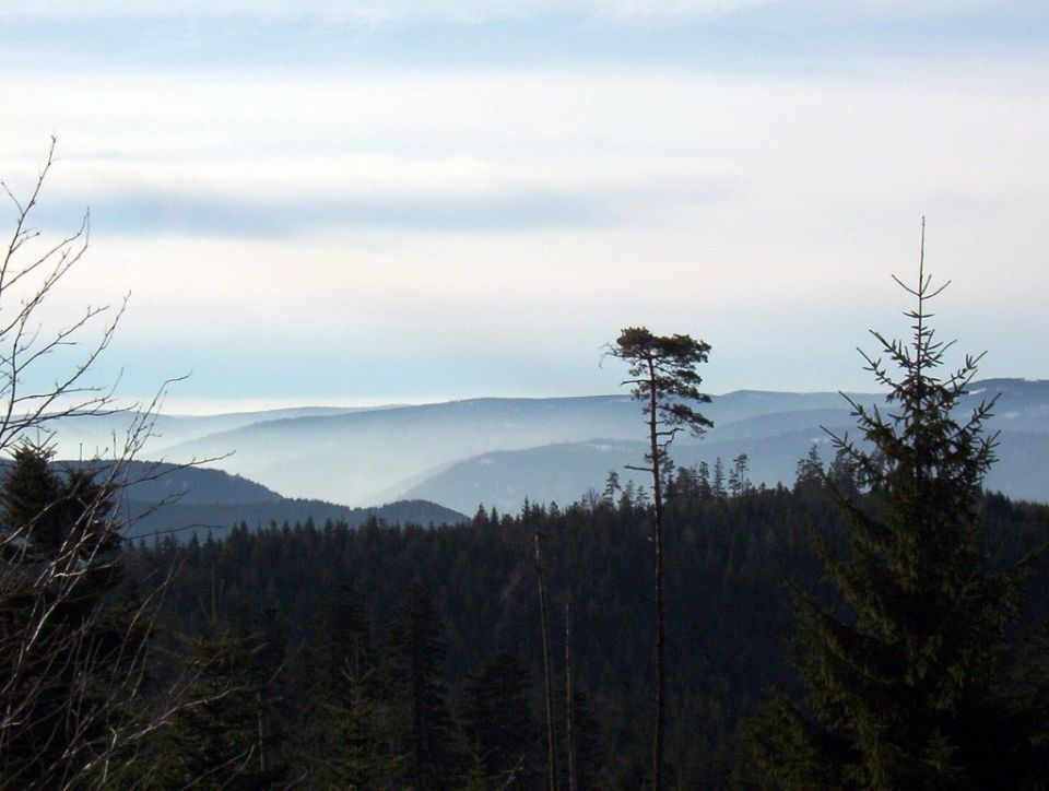 أجمل وأكبر 10 غابات في العالم